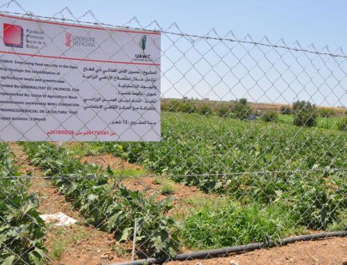 Promoción Social trabaja en Gaza para garantizar el acceso a los recursos agrarios y la soberanía alimentaria de su población