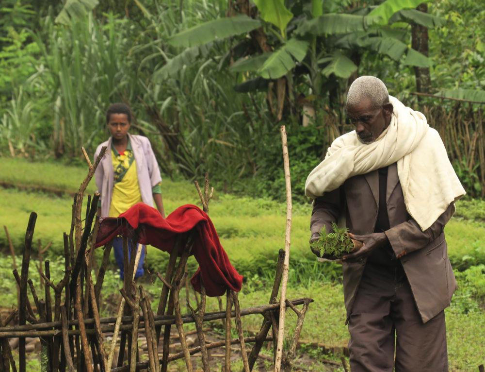 Se mejora cuantitativa y cualitativamente la productividad agrícola en Etiopía