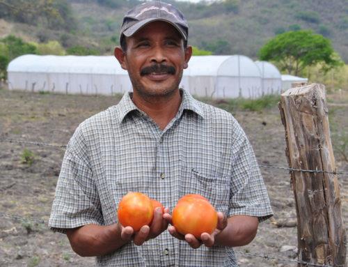 """Rafforzamento del """"Centro de Entrenamiento Agrícola (CEA)"""" per la formazione di 400 piccoli agricoltori nicaraguensi"""