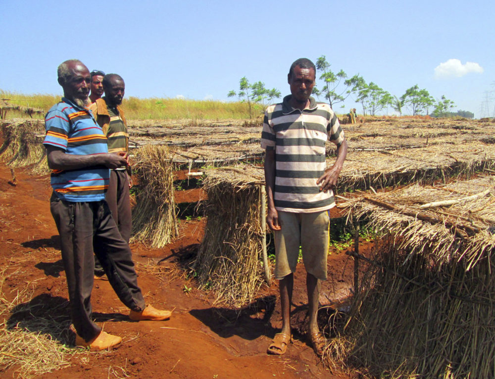 Desarrollo rural integrado con enfoque ambiental y de género en East Wellega (Oromiya) Etiopía